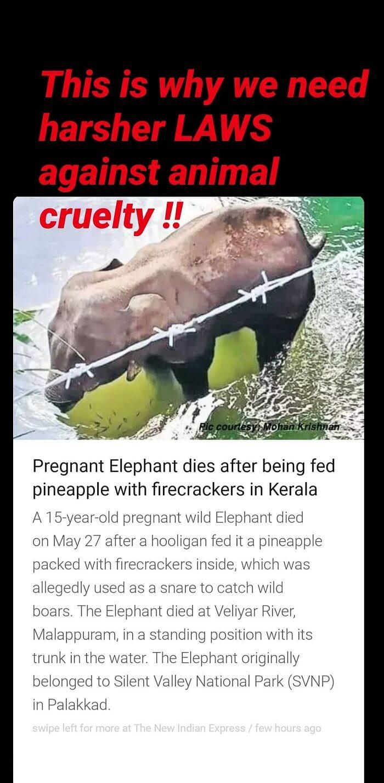 Anushka Sharma response on killing elephant in India
